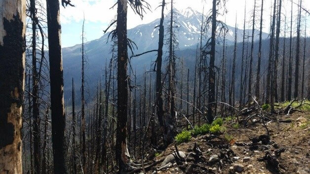 Whitewater Fire Reforestation project for Shred for Sustainability